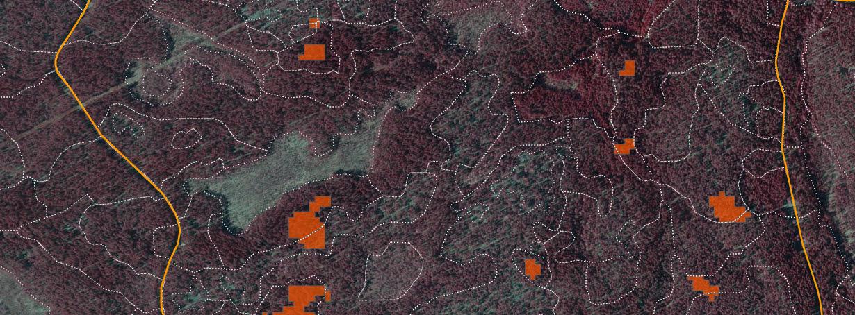 Angrepp av granbarkborre visas i orange färg på bilden.