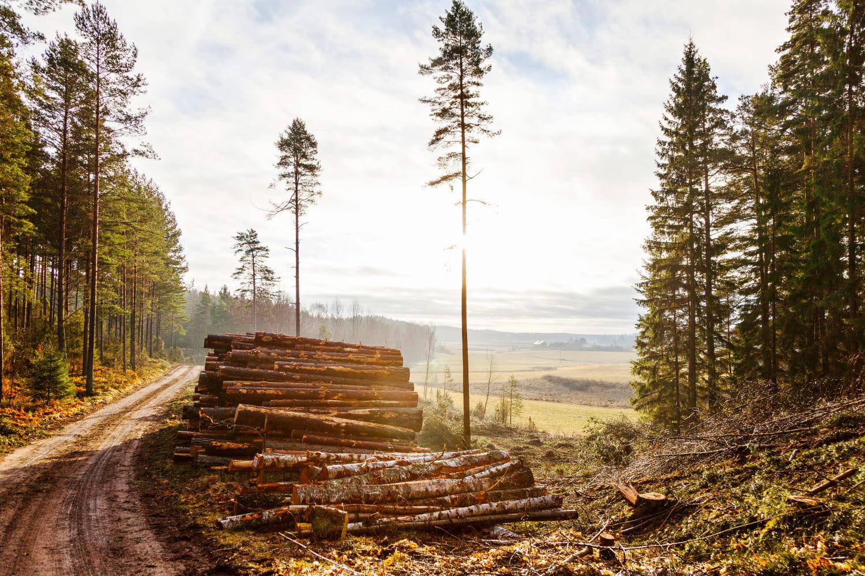 Skogsbruk minskar utsläppen av koldioxid visar ny rapport