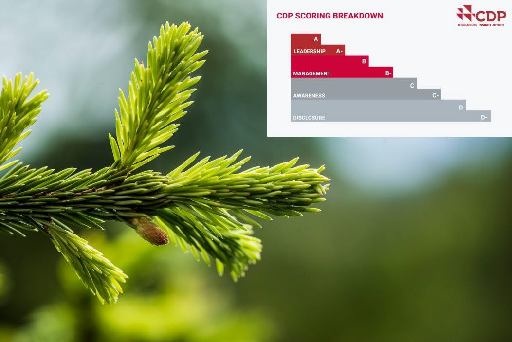 Holmen scores highly in CDP climate and forestry