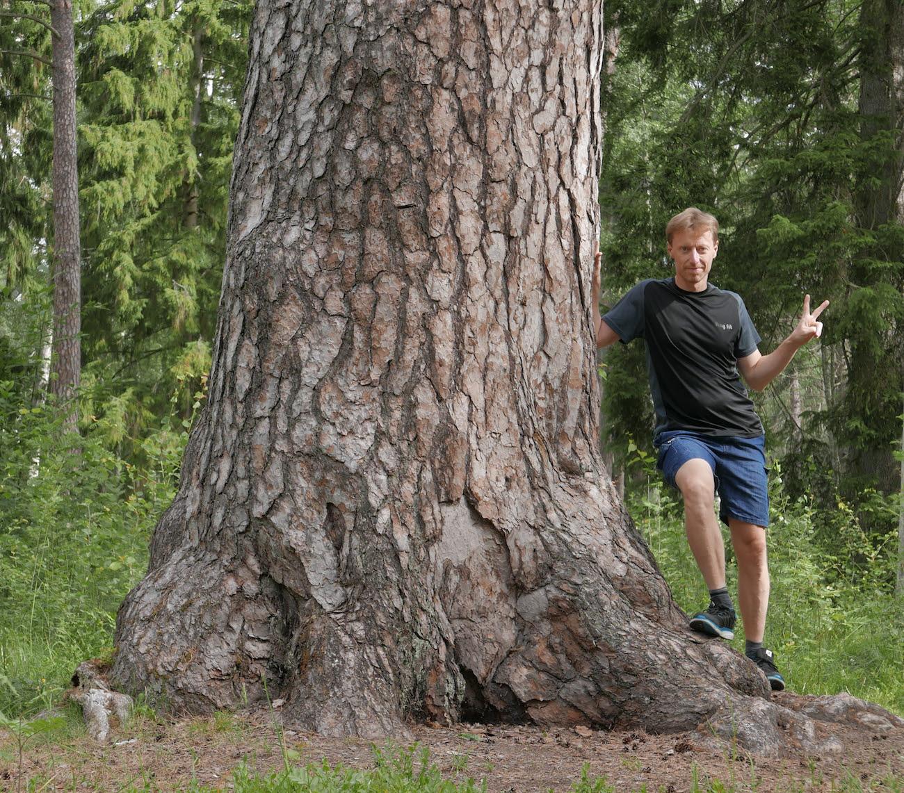 Mattias Glad lutar sig mot en tall med omkretsen 447 cm i Kronparken, Uppsala.