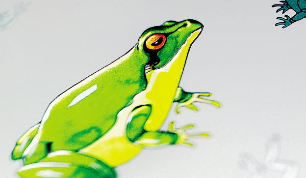 Green frog with hot foil stamping