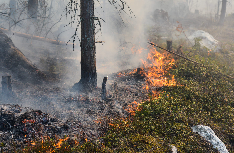 Brinnande markvegetation i skog.