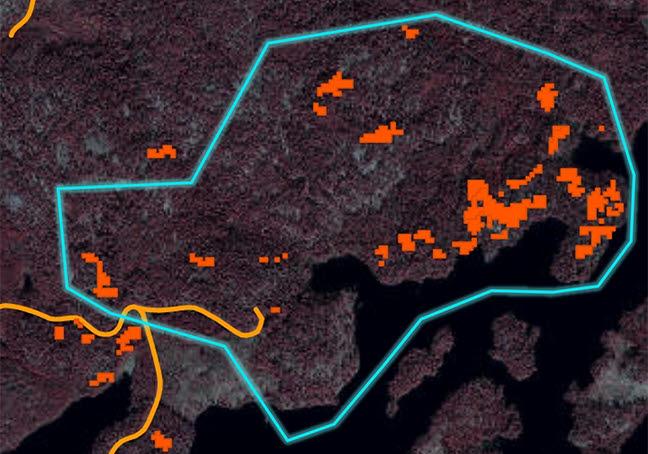 En digital karta över en skog som är angripen av granbarkborre. De faktiska skadorna är utmärkt i rött.
