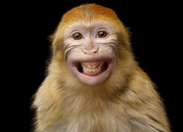 25 ways_monkey