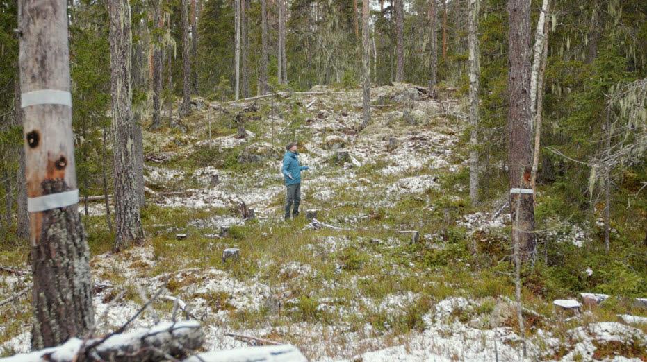 Jan Åhlund, skogsbrukschef, Holmen Skog, besöker ytan som luckhuggits i Kunnådalens kunskapsskog. – SLU:s forskningsprojekt är ett exempel på precis det som är syftet med kunskapsskogarna, att möjliggöra forskning och bygga ny kunskap.