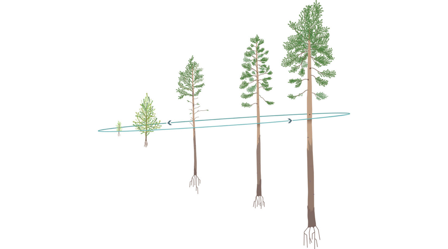Graphical illustrations of trees