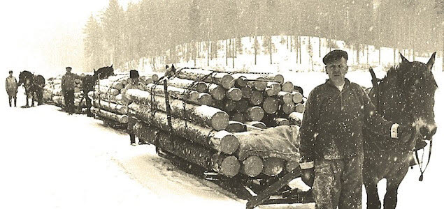 Old fashioned timber delivery