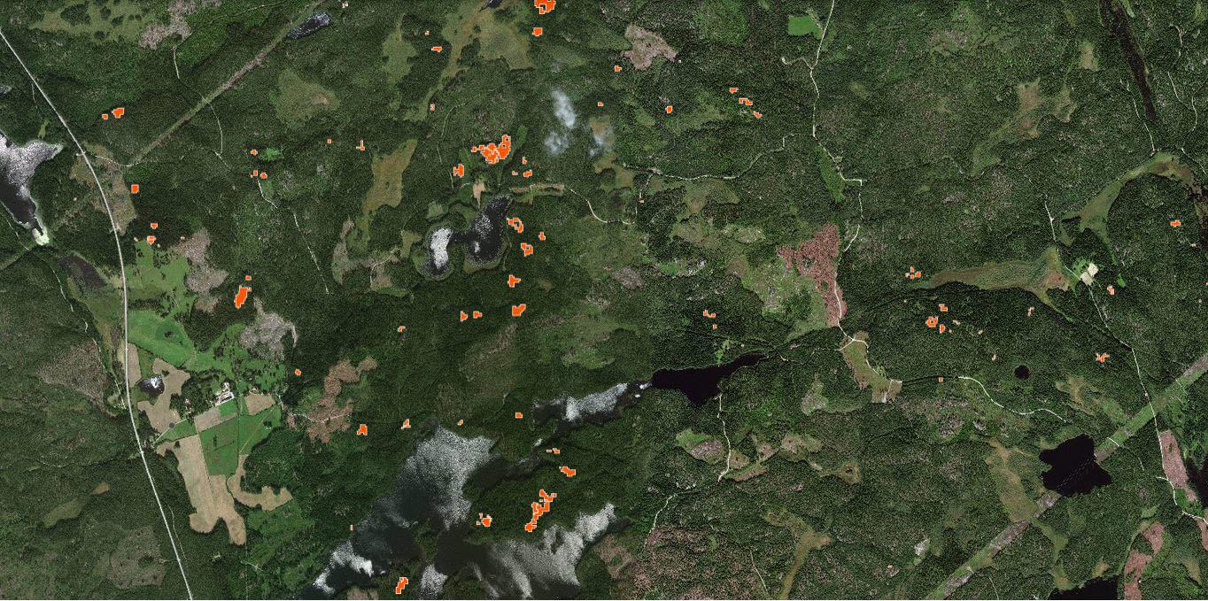 Holmens granbarkborrekarta där röda fält utmärker skadad skog.