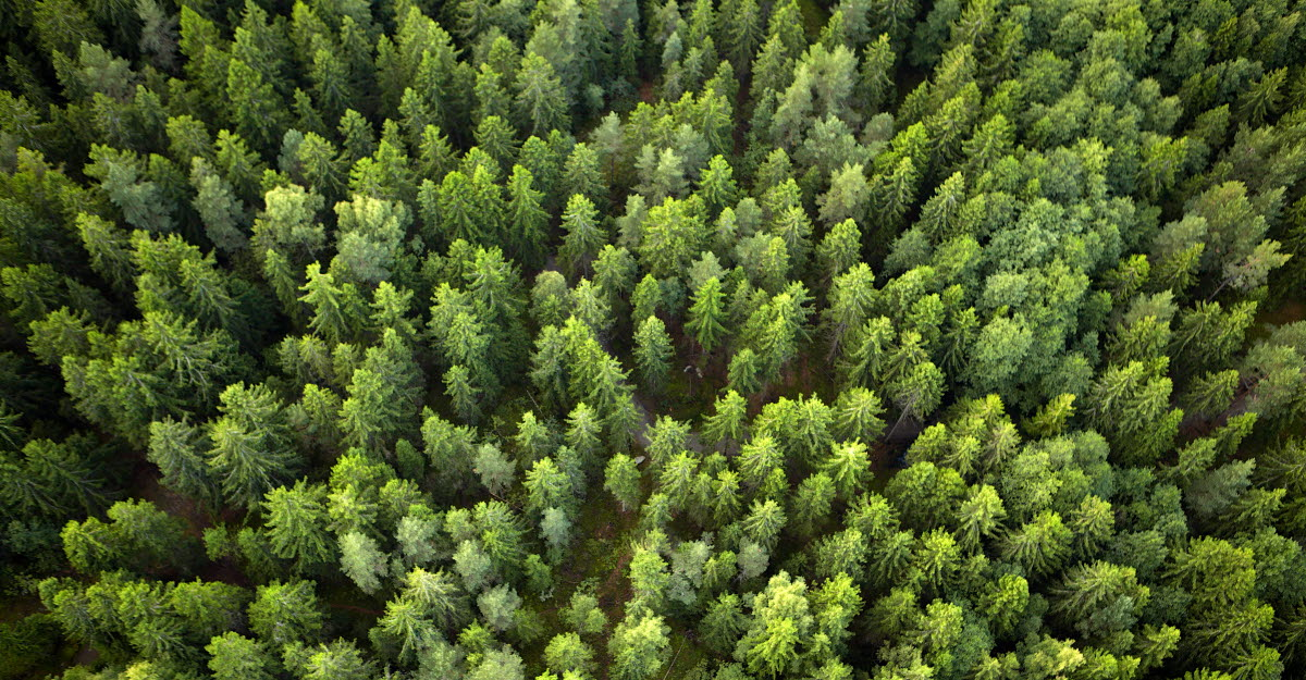 Landscape photo of trees from above